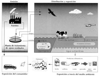 Algunos ejemplos de efectos de ecotoxicidad y sus fuentes
