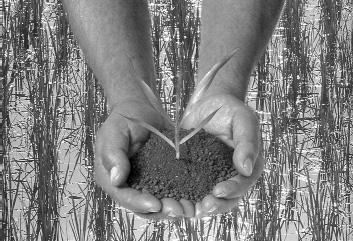 Cultivar sin agrotóxicos: la importancia de la biodiversidad