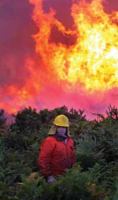 Los bosques españoles, algo más que sumideros de carbono