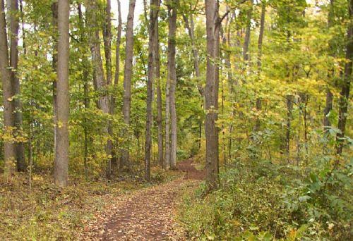 Nuestros bosques generan riqueza que dejamos arder