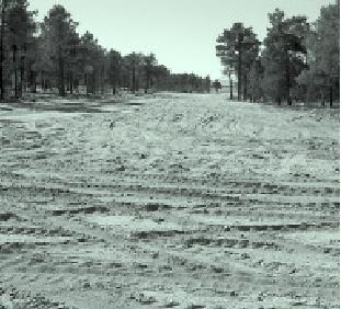 ¿Qué está pasando con los espacios protegidos en Castilla y León?
